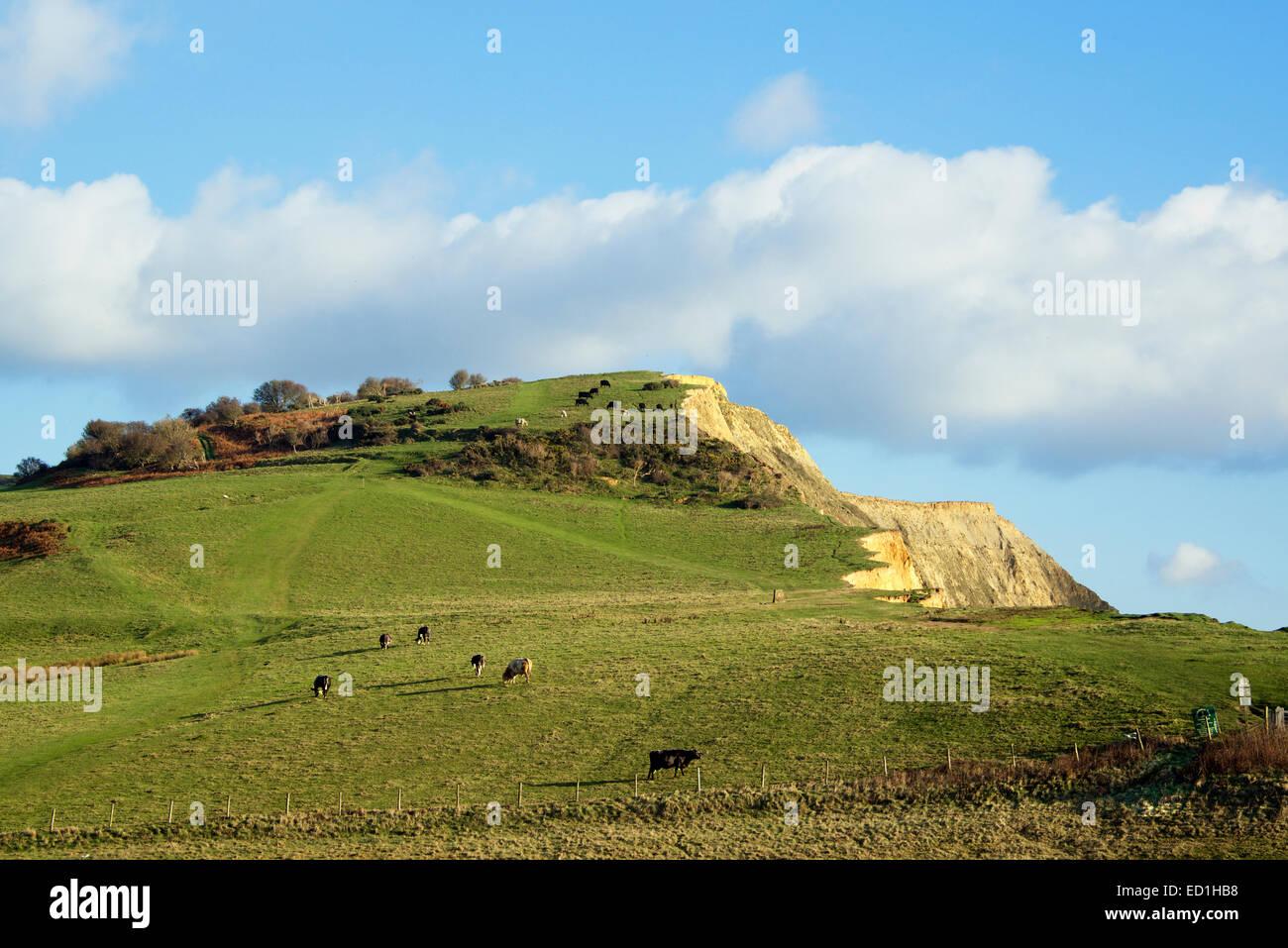 Rural pastures above Branscombe Beach East Devon England - Stock Image