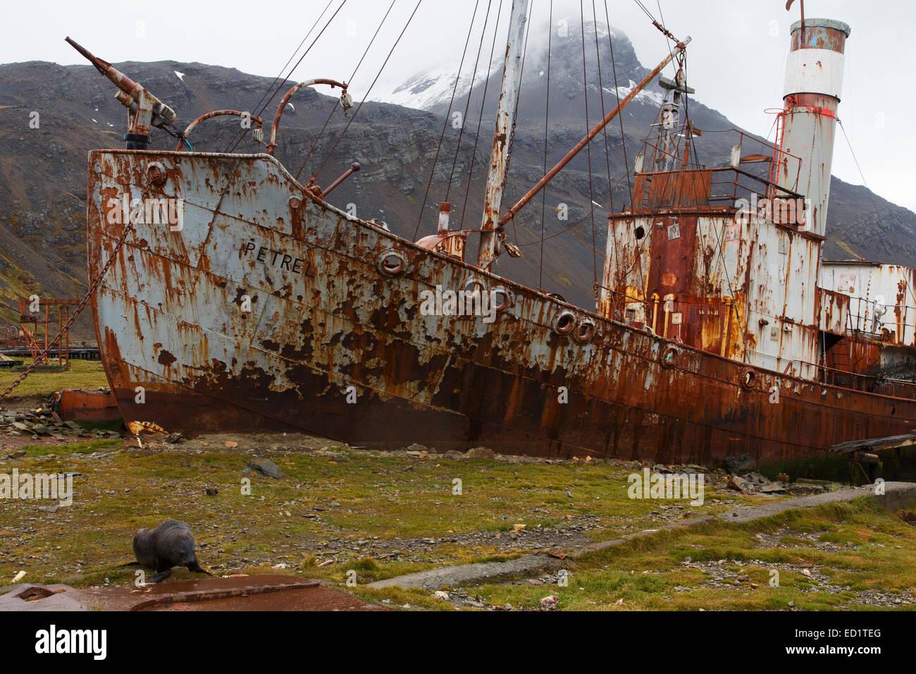 Historic whaling station of Grytviken, South Georgia, Antarctica. - Stock Image
