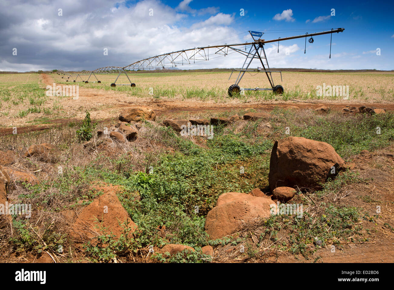 Mauritius, Albion, agriculture, Valley linear crop irrigation machine in newly planted sugar cane field - Stock Image