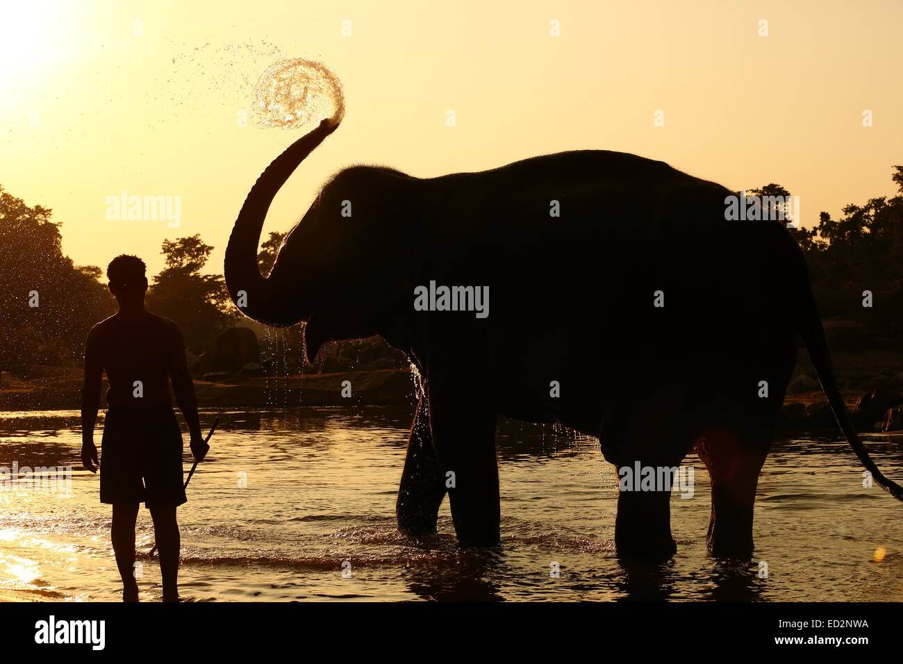 Mahout giving bath to elephant in Kanha National Park - Stock Image