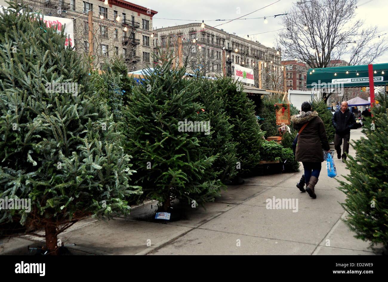 Christmas Trees For Sale.New York City Fresh Christmas Trees From North Carolina