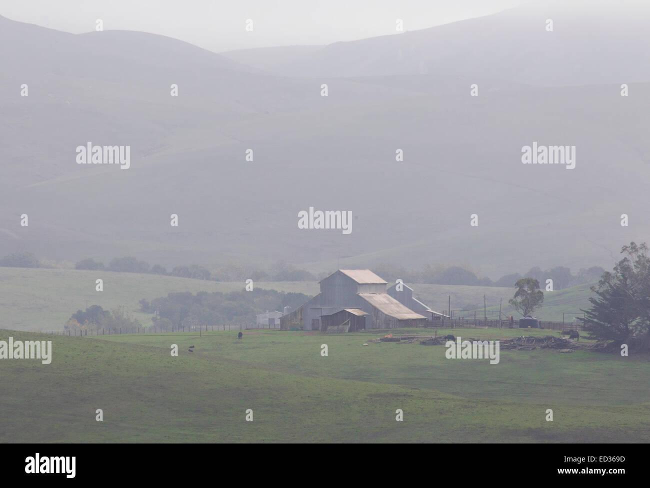 Pastoral Scene on Foggy Day - Stock Image
