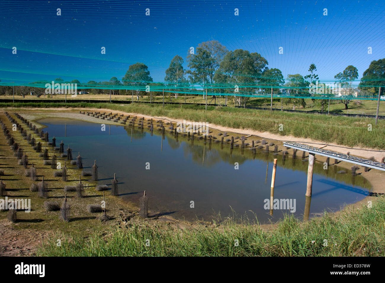 Large outdoor aquaculture pond at redclaw crayfish farm with habitat Stock Photo: 76903593