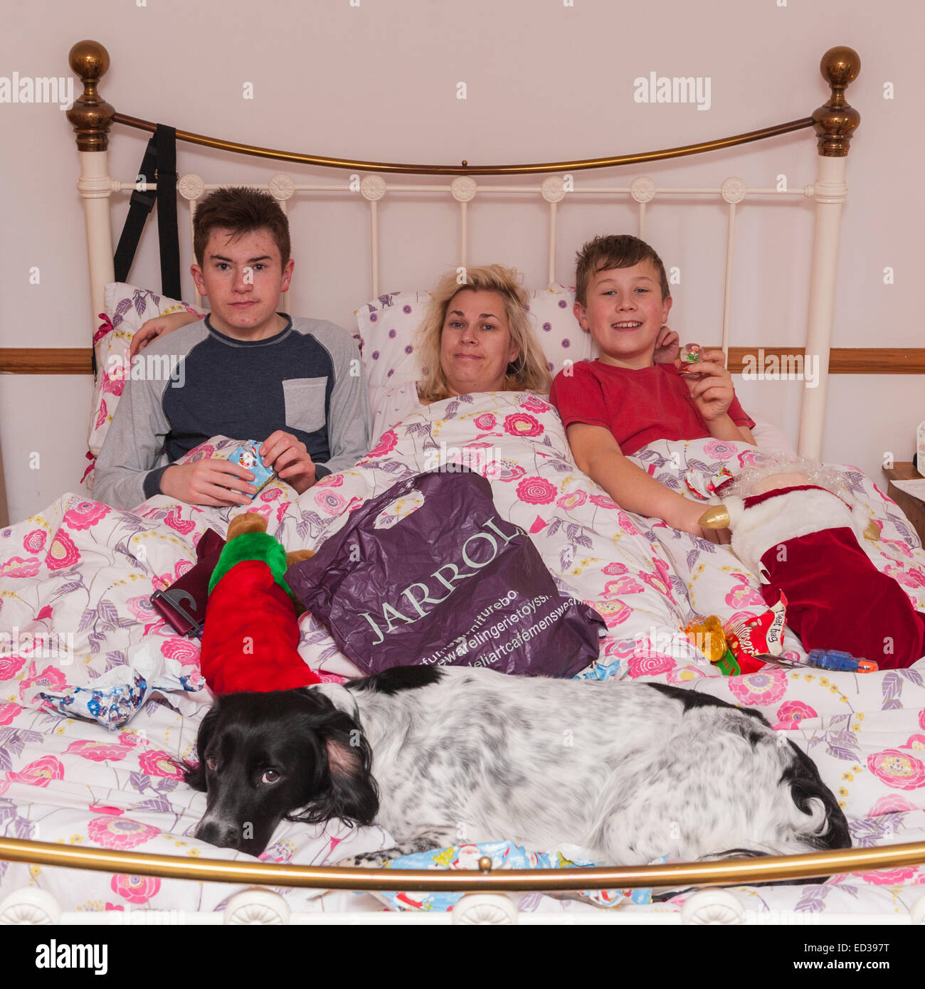 Two Brothers And Mum Opening Stockings In Mum's Bed On Christmas Morning - Stock Image