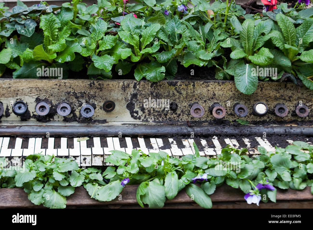 Old Organ with plants growing out of it in a Garden - Stock Image
