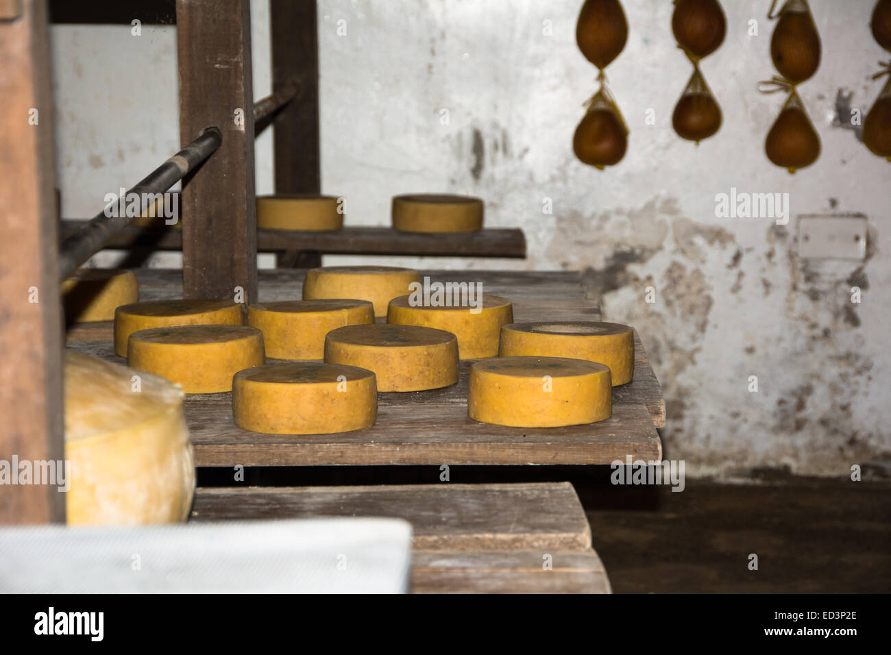 Traditional Cheesemaking methods in Cajamarca region of Norther Peru - Stock Image