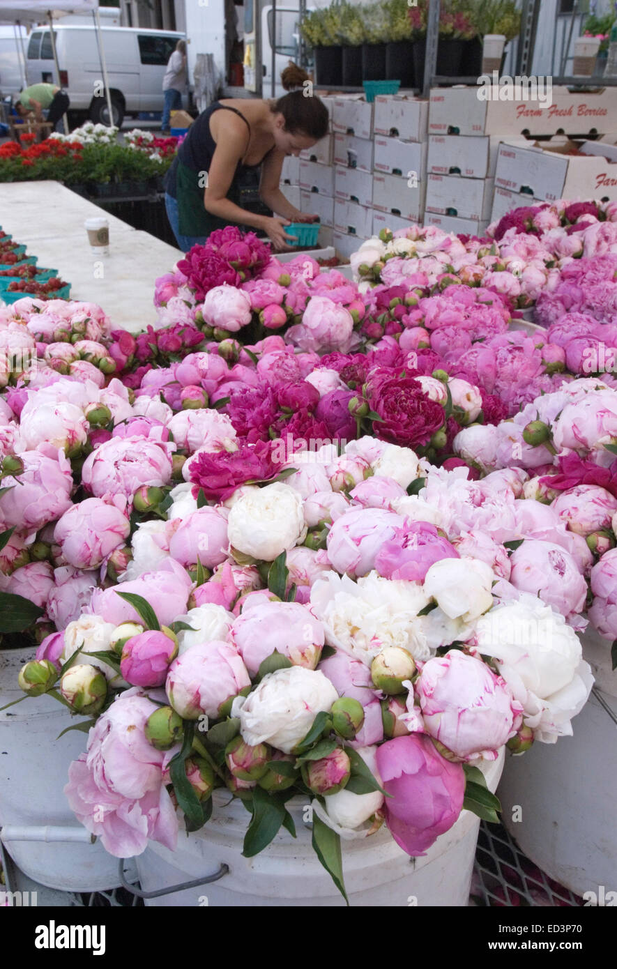 Peonies for sale at Union Square Market in New York City Stock Photo