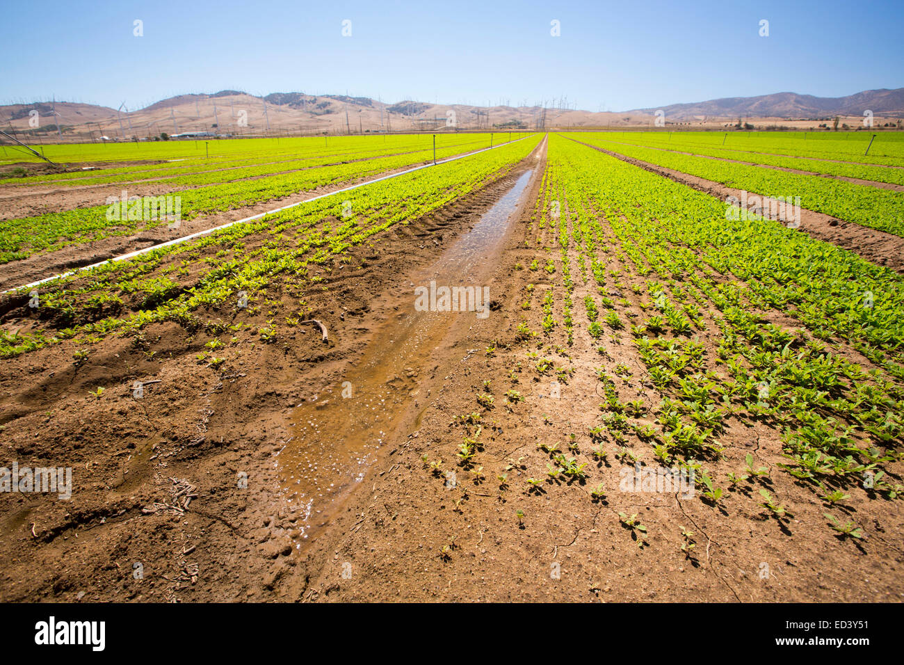 Crops being irrigated below the Tehachapi Pass wind farm, the first large scale wind farm area developed in the - Stock Image