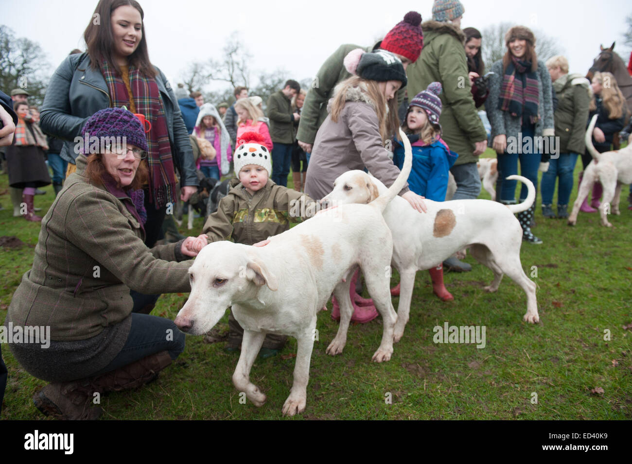 Children kids parents stroking patting fox hounds Staffordshire, UK. 26th Dec, 2014.  Annual Boxing Day meet of - Stock Image