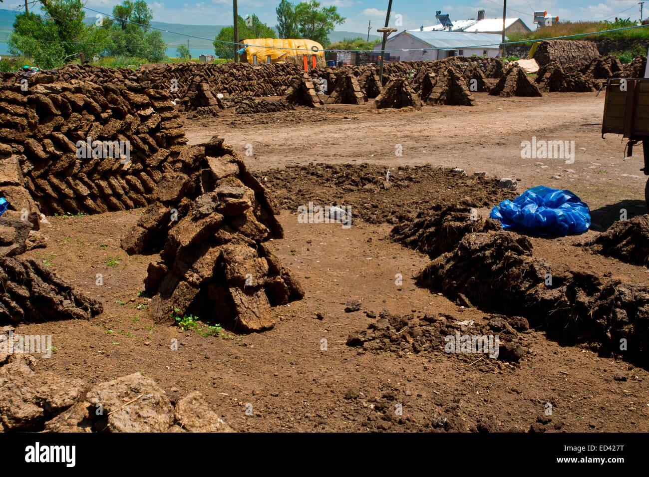Drying manure for fuel In the remote village of Gulyuzu, by Cildir Golu Lake, far eastern Turkey - Stock Image