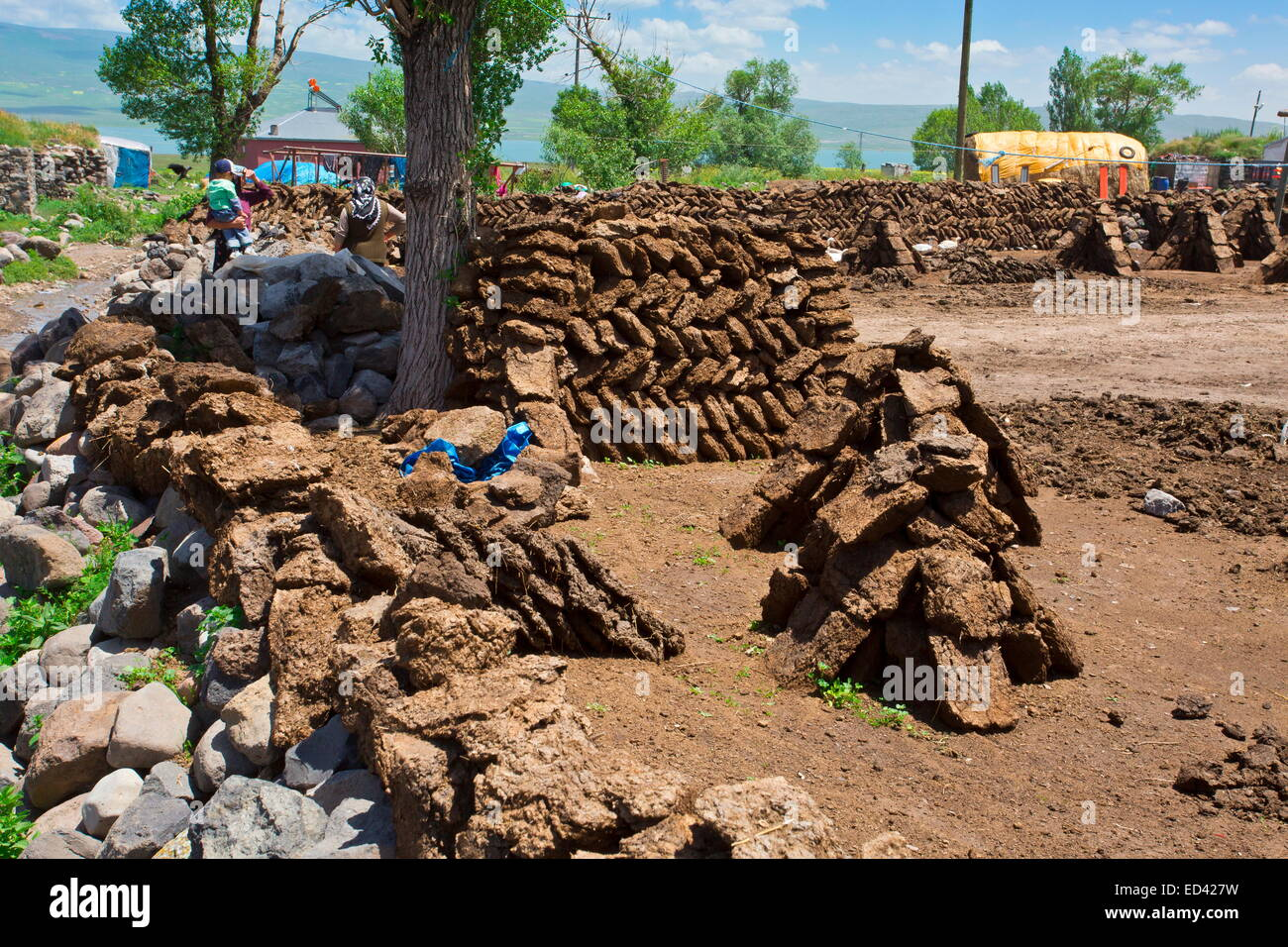 Drying manure for fuel In the remote village of Gulyuzu, by Cildir Golu Lake, far eastern Turkey - Stock Image
