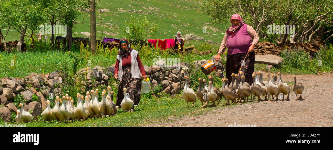 Village ladies tending flocks of geese In the remote village of Gulyuzu, by Cildir Golu, far eastern Turkey - Stock Image