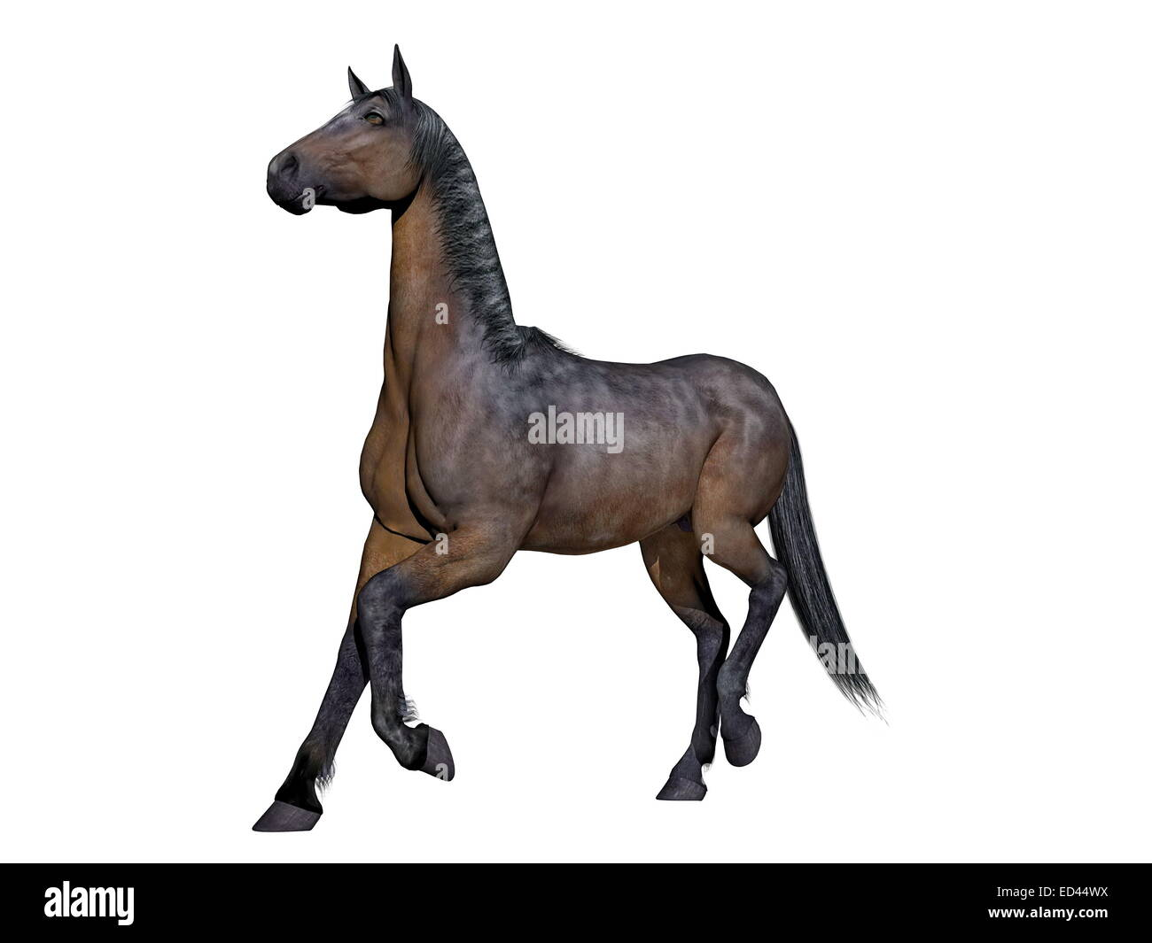 Brown horse running in white background - Stock Image