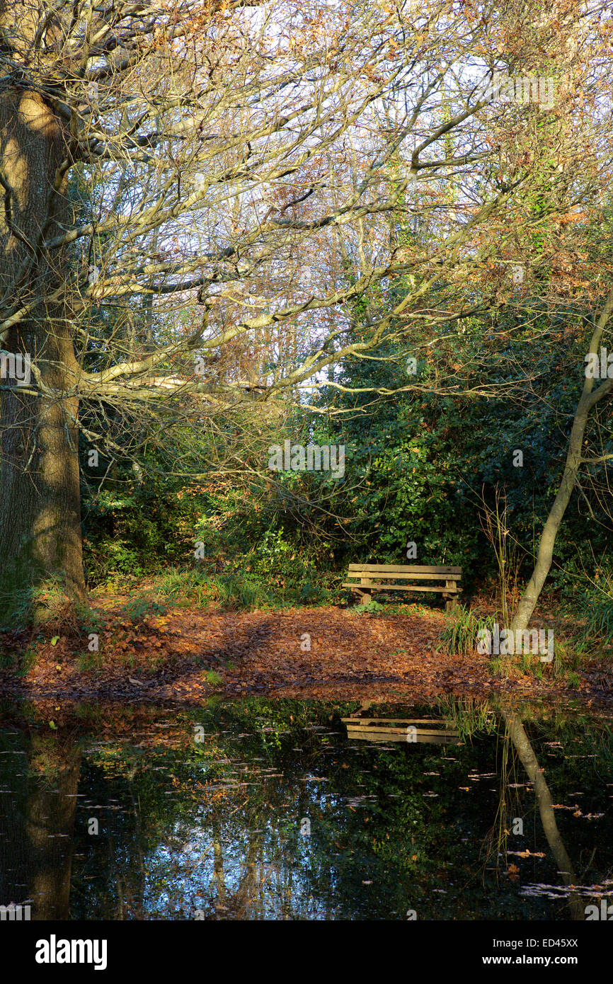 Winter pond. Park bench by a cold wooded pond. Quiet spot for contemplation. - Stock Image