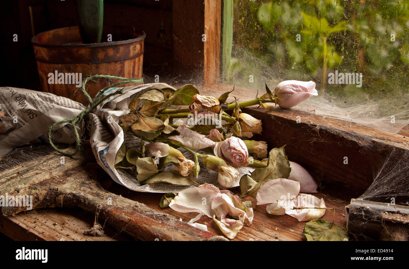 Bunch of dead roses - Stock Image