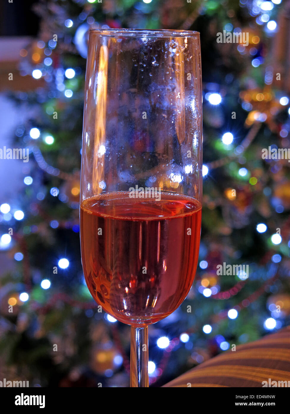 Dangers of festive drinking, one more glass of rose wine at Christmas, in front of tree of decorations - half glass - Stock Image