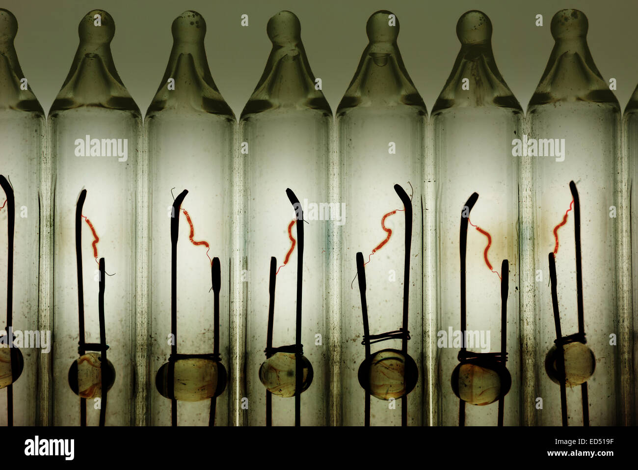 rows of tungsten filament light bulbs showing signs of metal ionization deposits on inside of glass - Stock Image