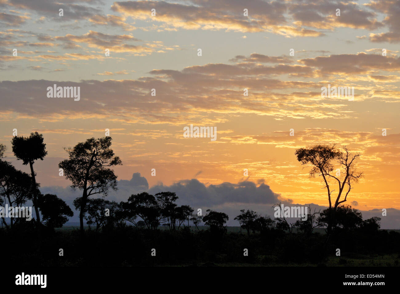 Sunrise on the Masai Mara, Kenya - Stock Image