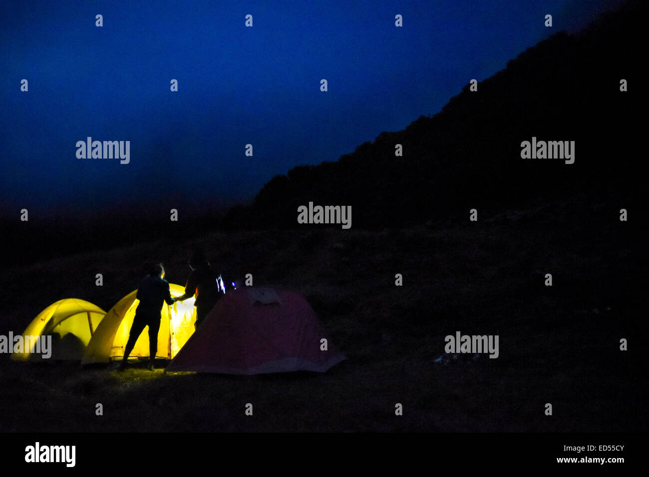 A couple build their camp at night in Suryakencana meadow, Gede Pangrango National Park. - Stock Image