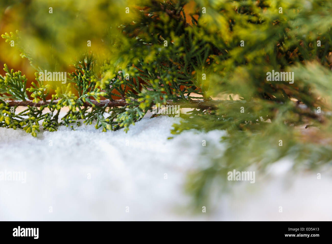 twig trees in the snow new year - Stock Image