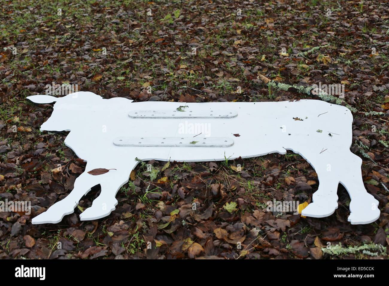 A flattened cutout cow on the ground. - Stock Image