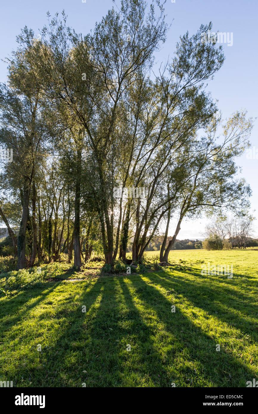 Trees casting shadows on Castle Meadows, Abergavenny, Wales, UK Stock Photo