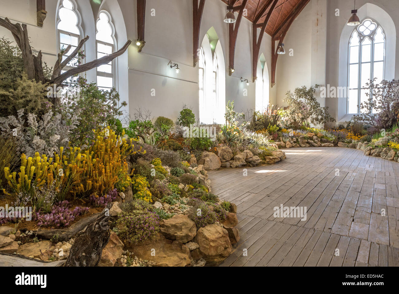 Clanwilliam wild flower show western cape South Africa - Stock Image