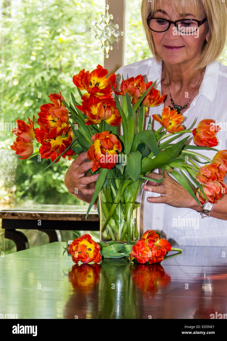 Mature adult caucasian woman arranging a vase of flowers or tulips in a bright home with windows. - Stock Image