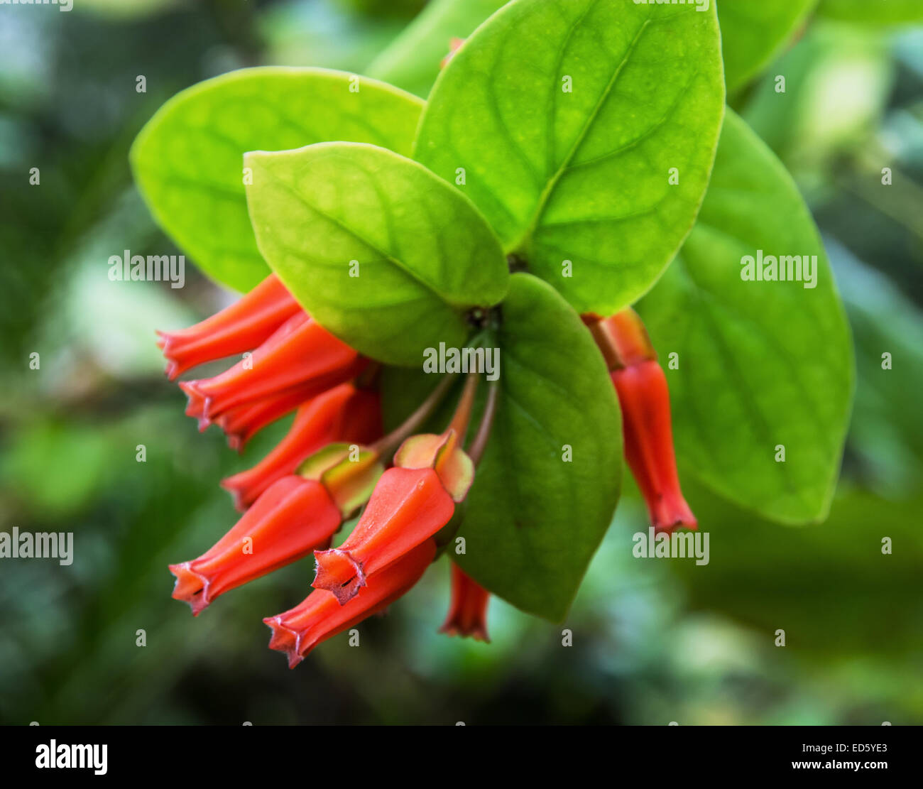 red tropical flowers natural background jungle theme stock photo