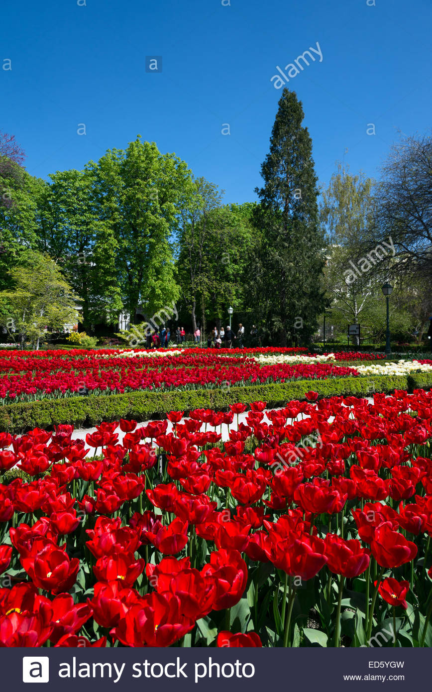 Red tulips in the Royal Botanical Gardens, Madrid, Spain - Stock Image