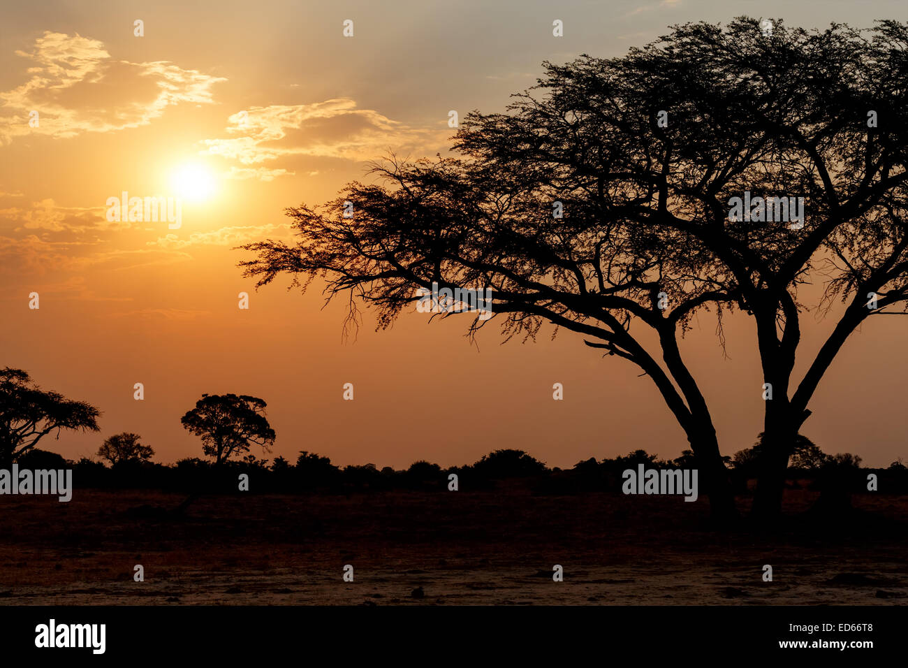 African sunset with tree in front, Hwange national park, Matabeleland, North Zimbabwe Stock Photo