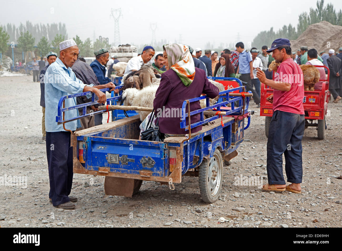 Uyghur farmers with motorized carts loaded with sheep arriving at the cattle market in Kashgar / Kashi, Xinjiang - Stock Image