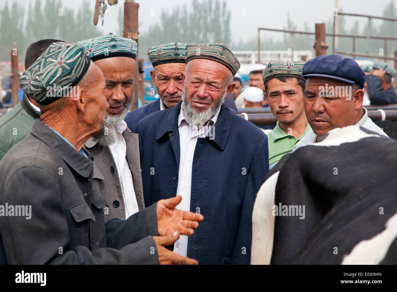 Uyghur Muslim farmers wearing doppas, trading cows at the cattle market in Kashgar / Kashi, Xinjiang Province, China - Stock Image