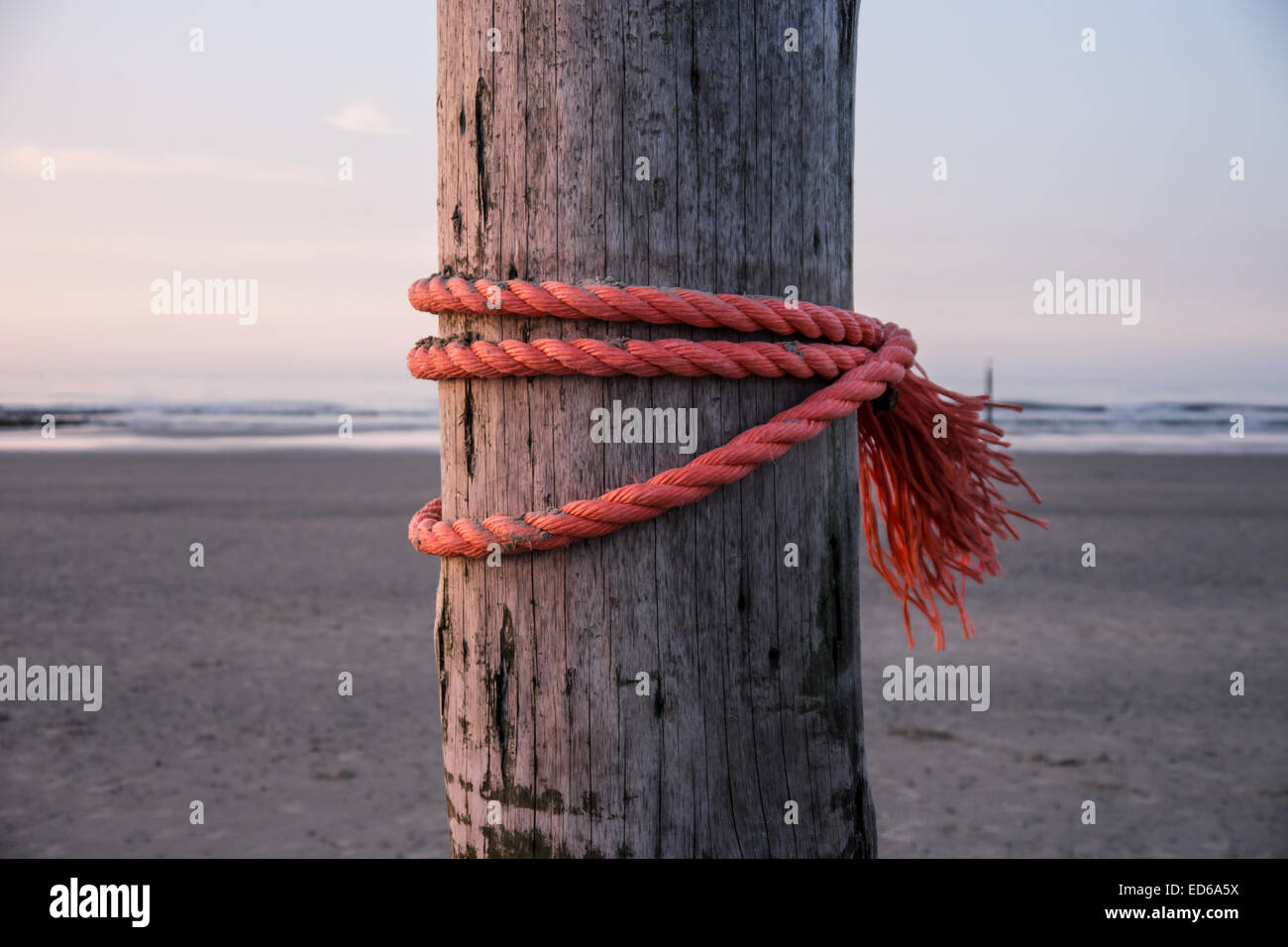 strong red rope on wooden stake Stock Photo
