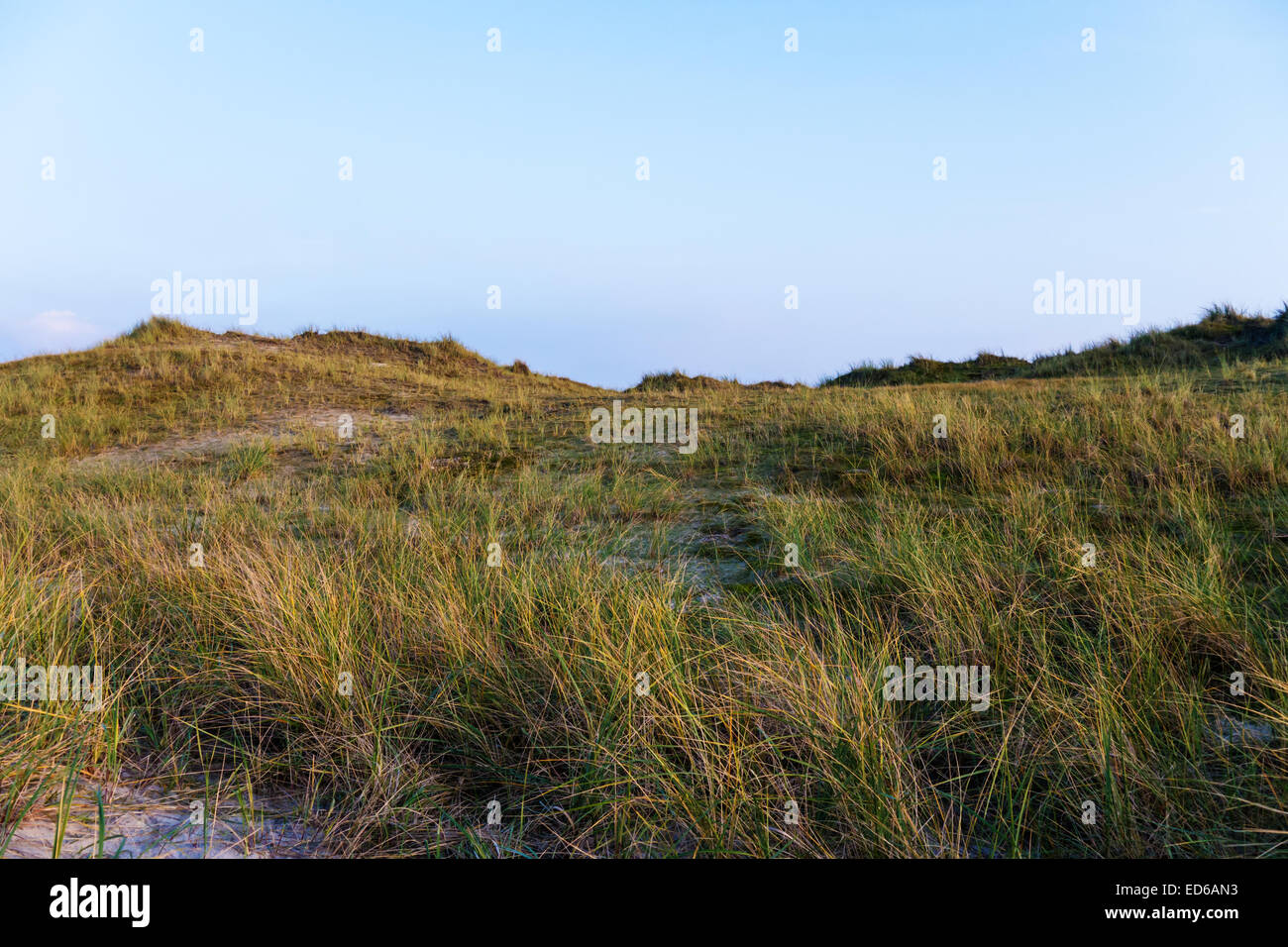 dune landscape and blue sky on norderney Stock Photo