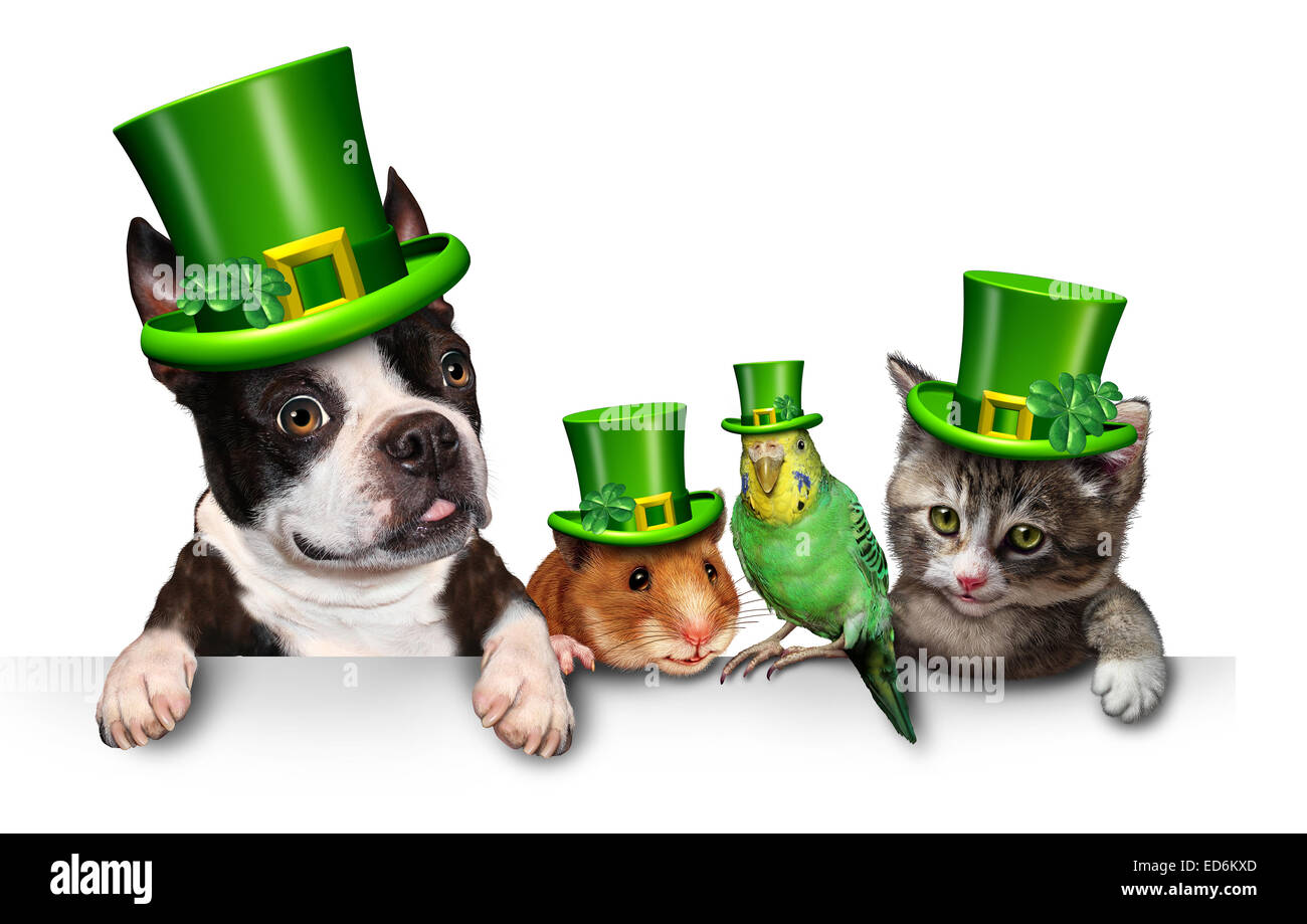 Green Pet sign with a fun cat happy dog cute hamster and budgie wearing a spring shamrock hats with clover hanging - Stock Image