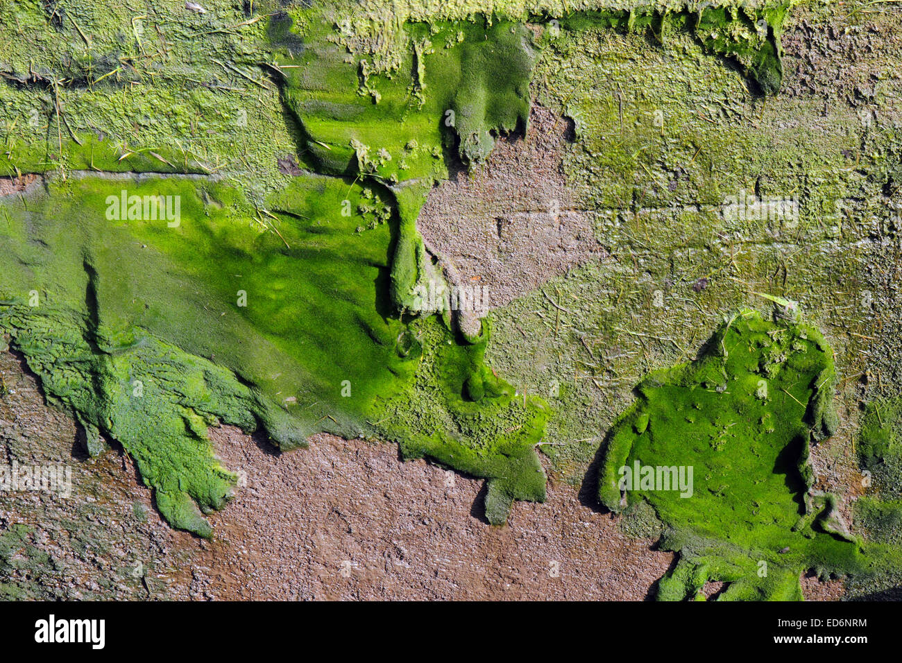 Damp Mould High Resolution Stock Photography And Images Alamy