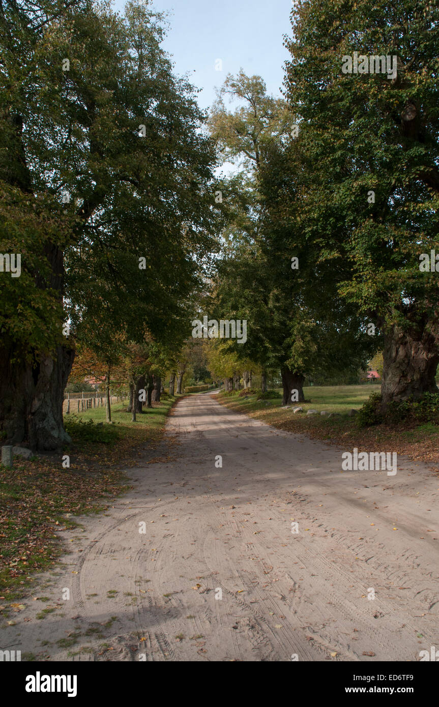 Large-Leaved Linden along a narrow road just outside Alt Placht in the German state Brandenburg.  Sommerlinden-Allee Stock Photo