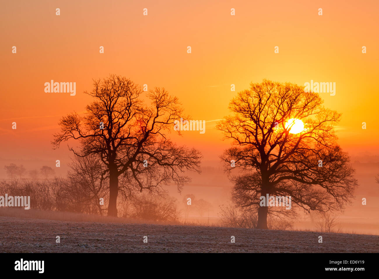 Northampton, UK. 30th Dec, 2014. A golden dawn breaks on a cold December morning over a frosted landscape, with Stock Photo