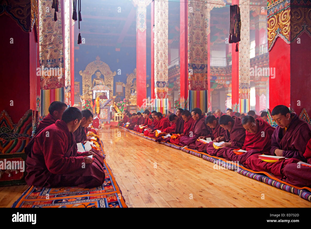 Young Tibetan monks saying mantras and meditating in Dzogchen Gompa / Deogchen monastery near Zhuqing, Sichuan Province, - Stock Image