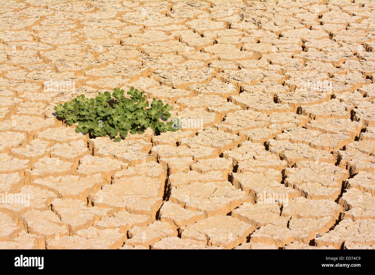 Dry soil, new life - Stock Image
