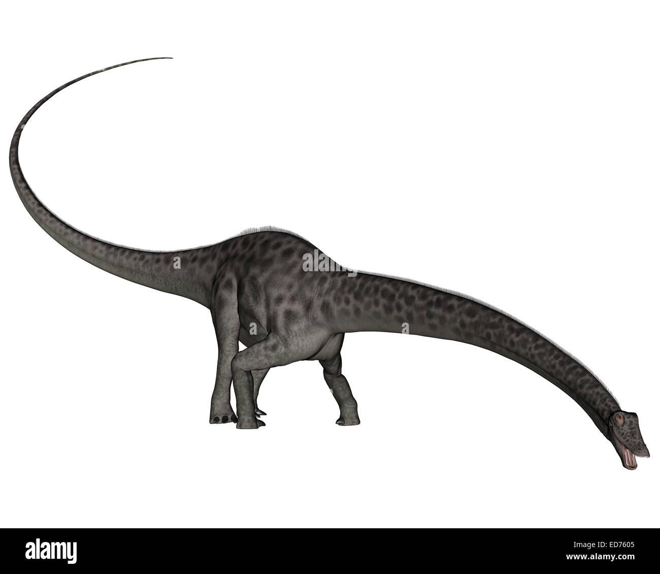 Diplodocus And Kentrosaurus Models: Diplodocus Head Stock Photos & Diplodocus Head Stock