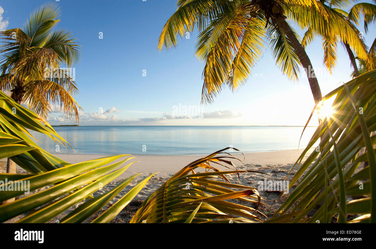Palm trees on tropical beach in Abaco, Bahamas - Stock Image