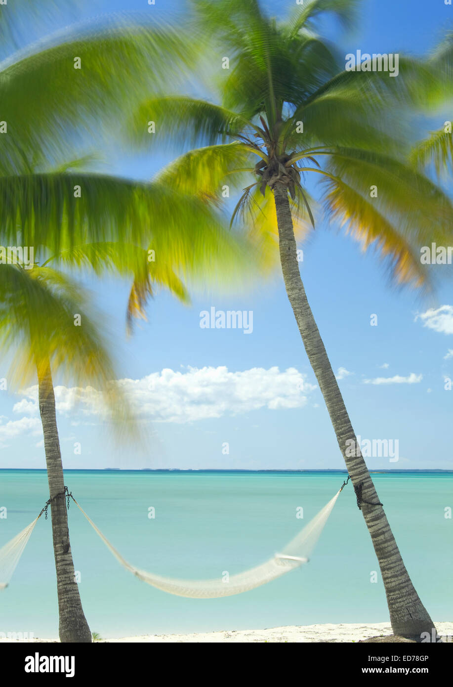 Hammock and palm trees in Abaco, Bahamas - Stock Image