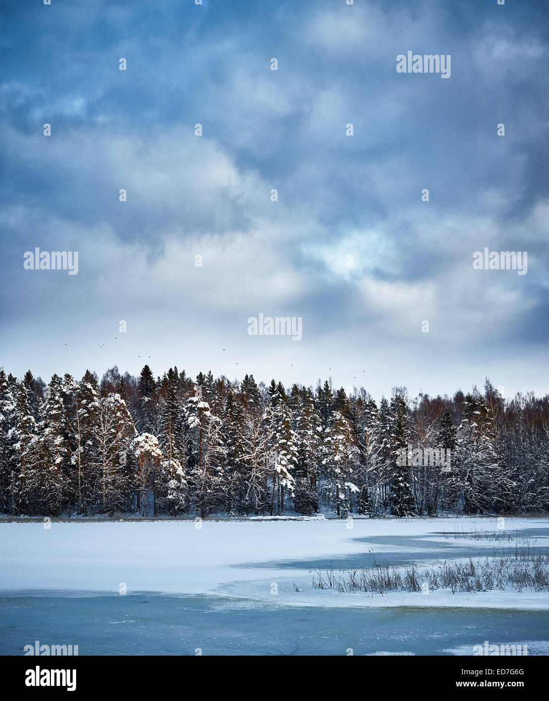 Frozen landscape, sea, forest and overcast sky - Stock Image