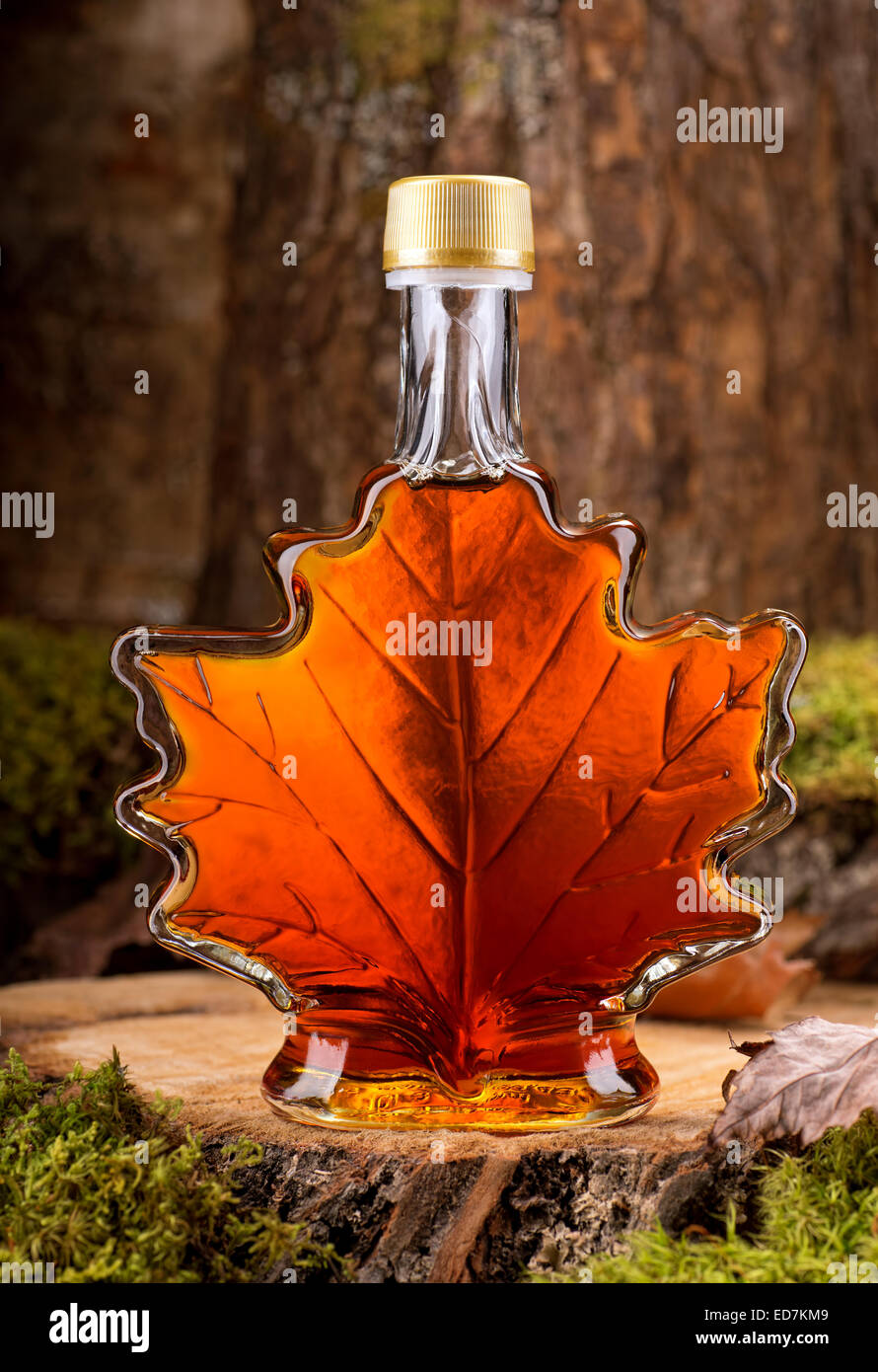 A bottle of delicious maple syrup in hardwood forest setting. - Stock Image