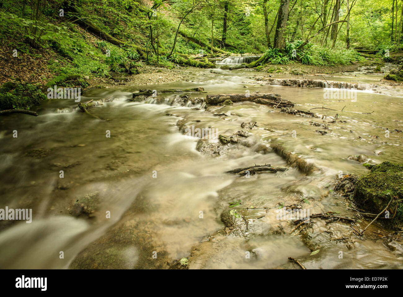 Stream in a green forest of the swabian alb in Germany - Stock Image