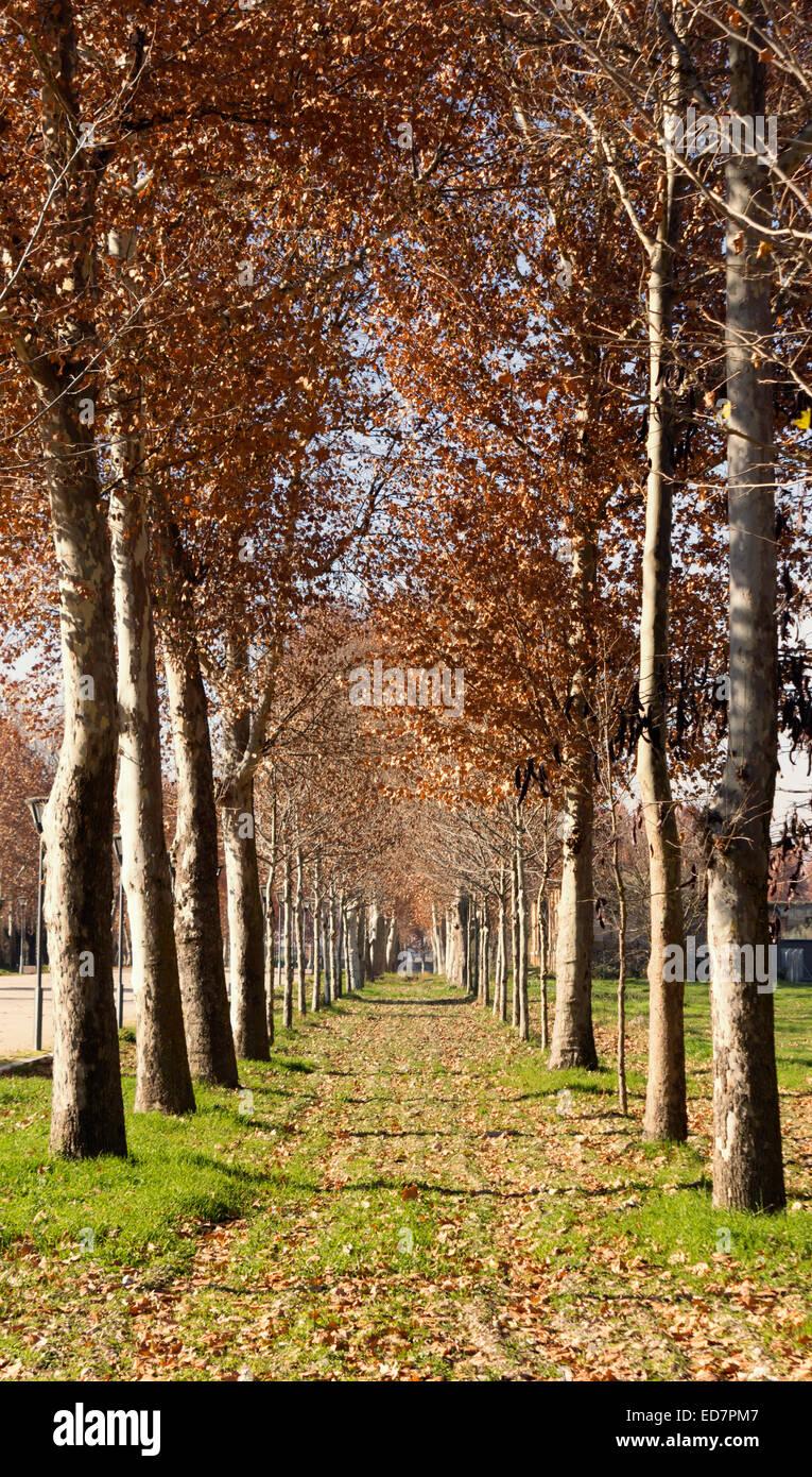 Autumn trees - Stock Image