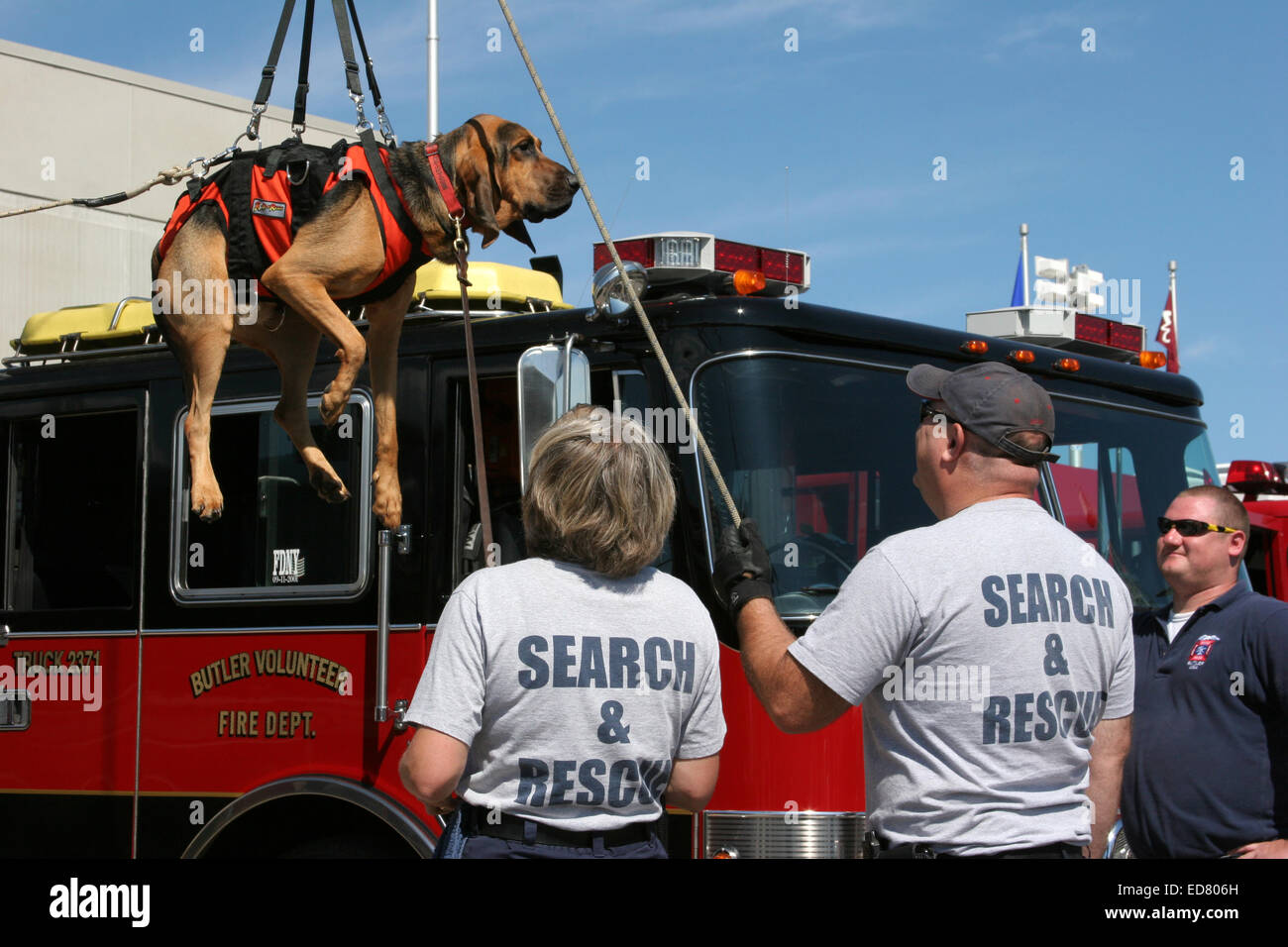 Search and Rescue team using an harness to lower a Bloodhound dog - Stock Image