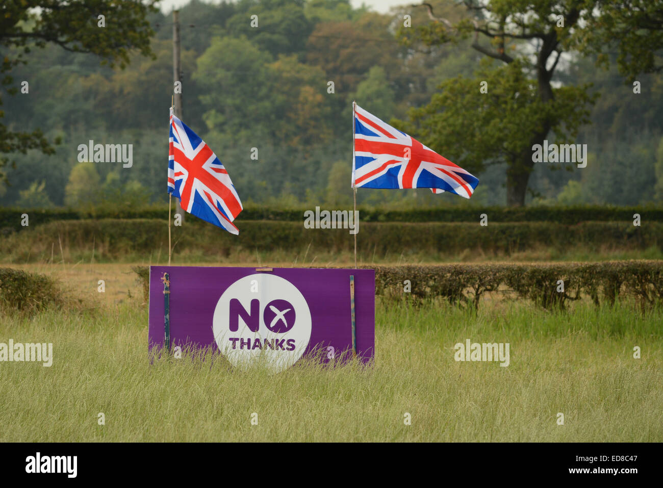 Scottish Independence -  Purple 'No Thanks' Scottish Independence Referendum sign decorated with Union Jack Flags Stock Photo